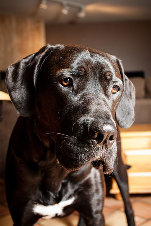 Black dog photograph