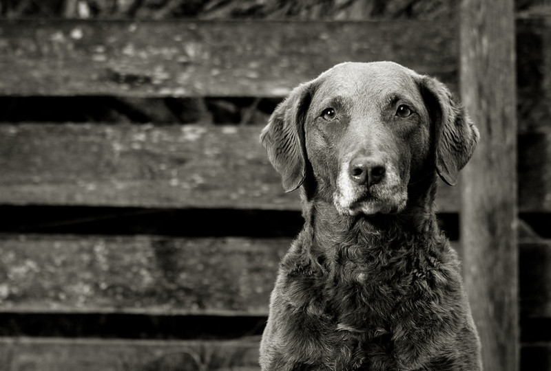 B&W portrait of a pretty dog)