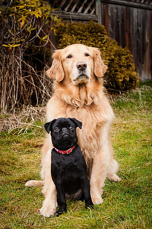 Photo of two very different dogs