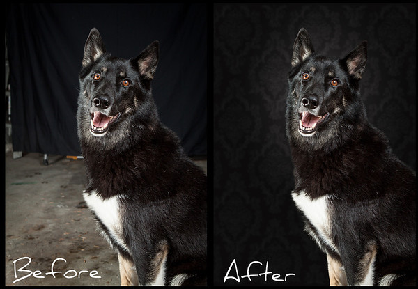 Before and after dog portrait