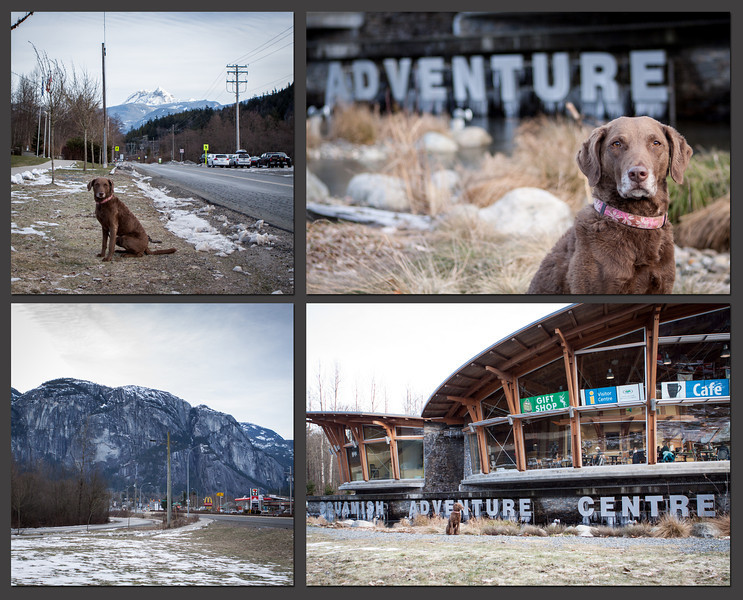 Squamish scenery and pet photography