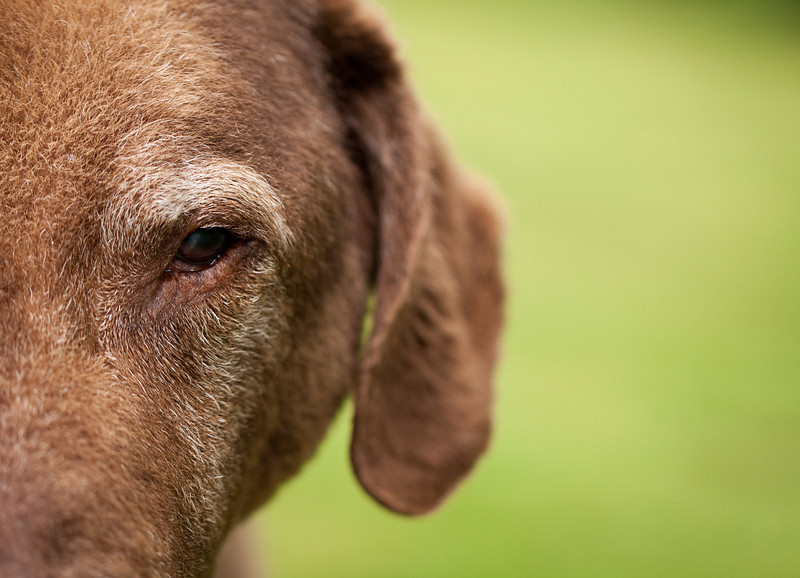 Close up photo of dog showing one eye with negative space