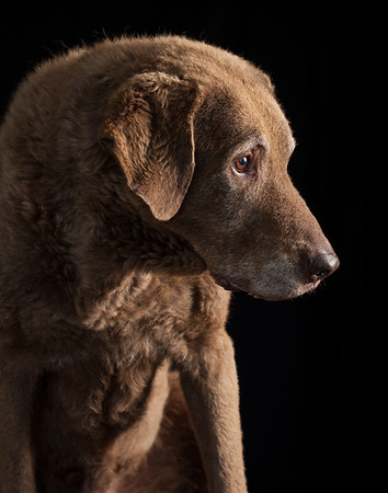Dog portrait photograph